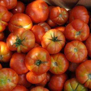Tomates octubre 2015