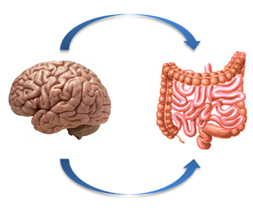 intestino cerebro 2