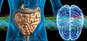 intestino cerebro