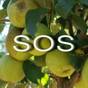 SOS Manzanas golden 20 10 15