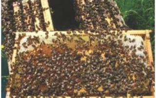 Miel glifosato