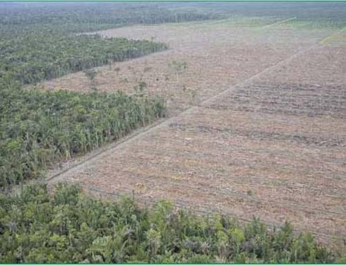 Libre comercio de aceite de palma y deforestación