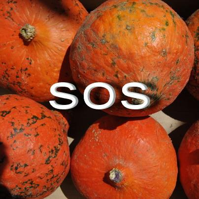 SOS Calabaza potimarron 07 14