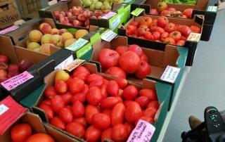 tomates10agosto