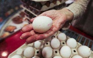 Barcelona   Barcelones  02 05 2015    Sociedad   Hueveria en el Mercat de la Sagrada Familia  donde venden huevos blancos       Foto  DANNY CAMINAL