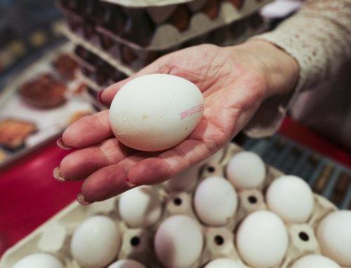 Francia da la espalda a los huevos de gallinas criadas en jaulas