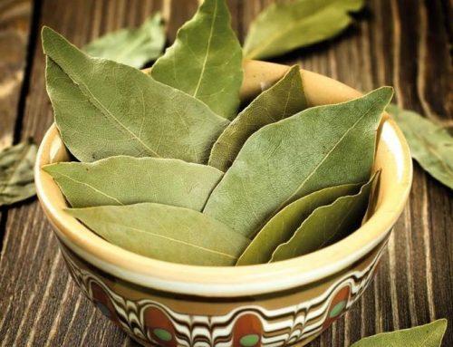 Las preciadas hojas de laurel