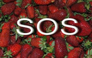 SOS fresas