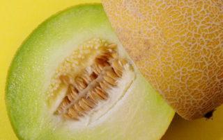 Melon galia ex 13 06 14