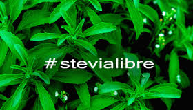 stevia libre2
