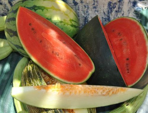 Fruta ecológica de temporada: melón y sandía
