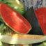 Melon y sandia julio 2016