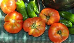 Tomates y pimientos pq