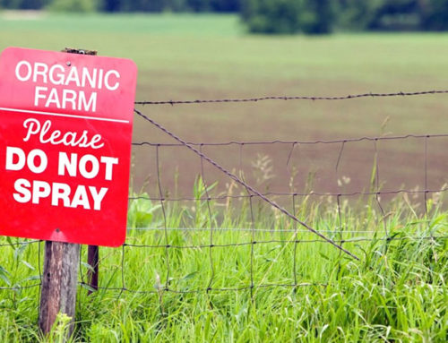 Comer ecológico reduce la exposición a los pesticidas