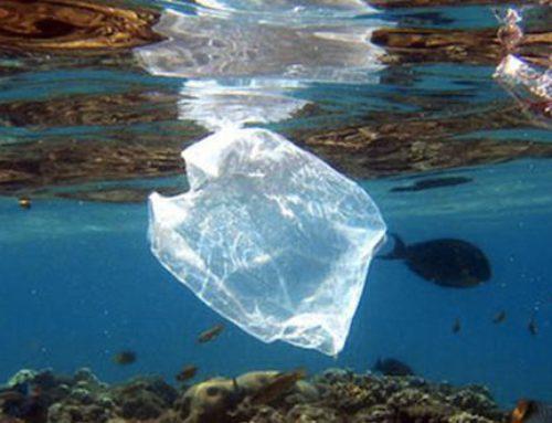 ¿Cuánto plástico hay en el océano? ¿Y en tu estómago?