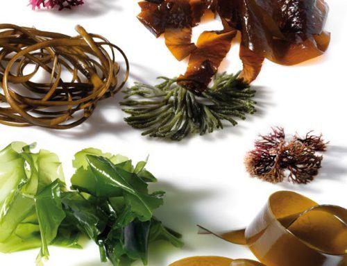 Las sanas verduras del mar