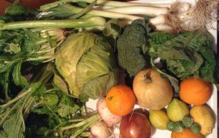 Vegetales vitamina A