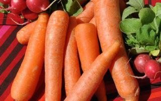 Zanahorias ex 9 06 14