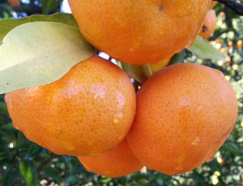 Fruta todos los días del año