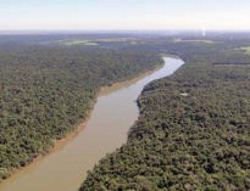 El fondo de un río que desemboca en el Paraná tiene más glifosato que un campo de soja