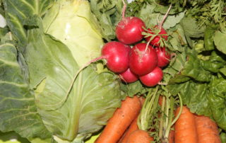 Rabanitos-col-y-zanahoria