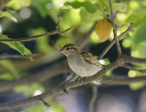 La población de aves en Francia se colapsa por los pesticidas