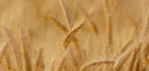 cordis-agriculturaecologica-l