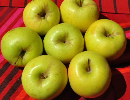 Tiempo de cosecha de la manzana